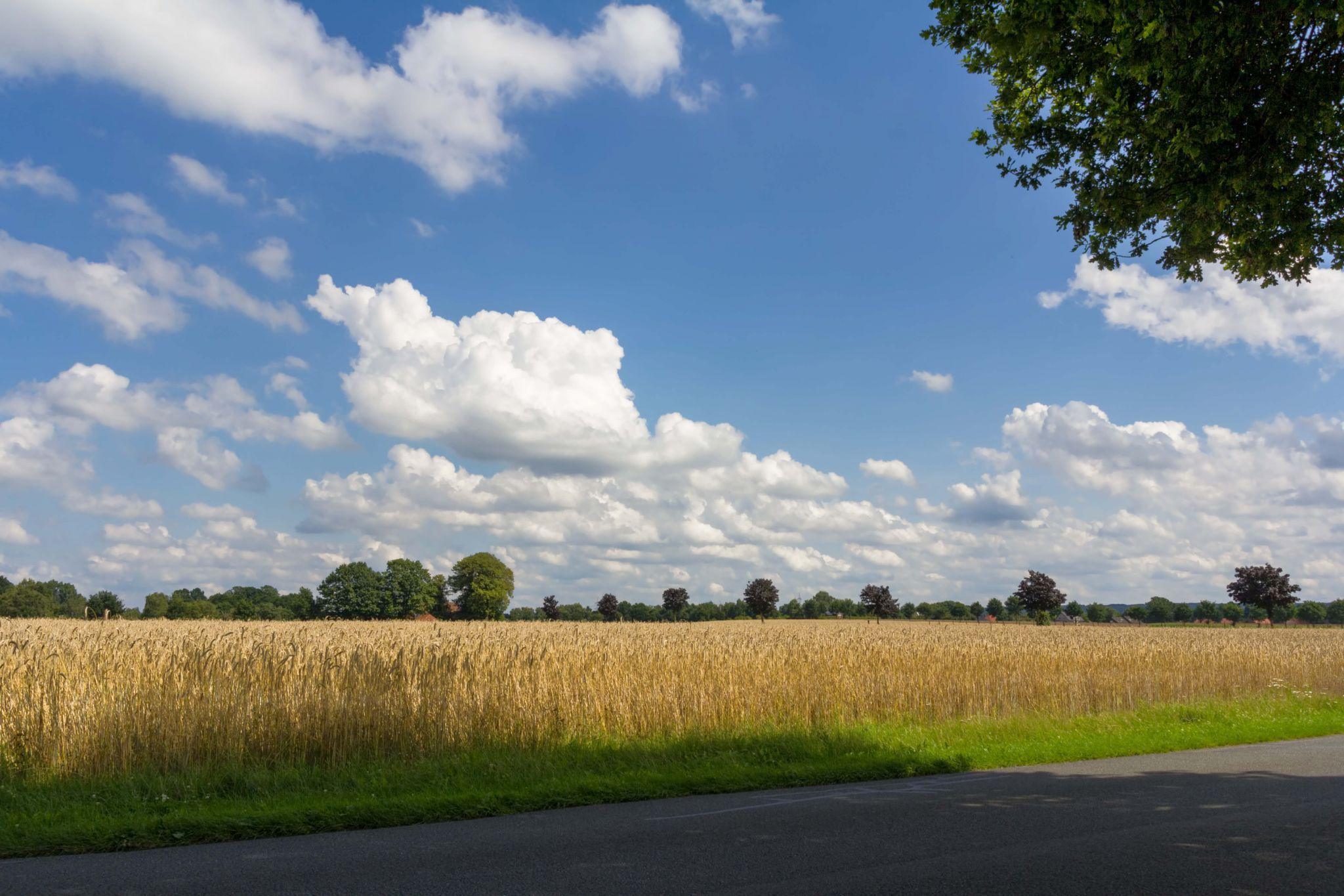 Landscape near Dümmer Lake, Germany