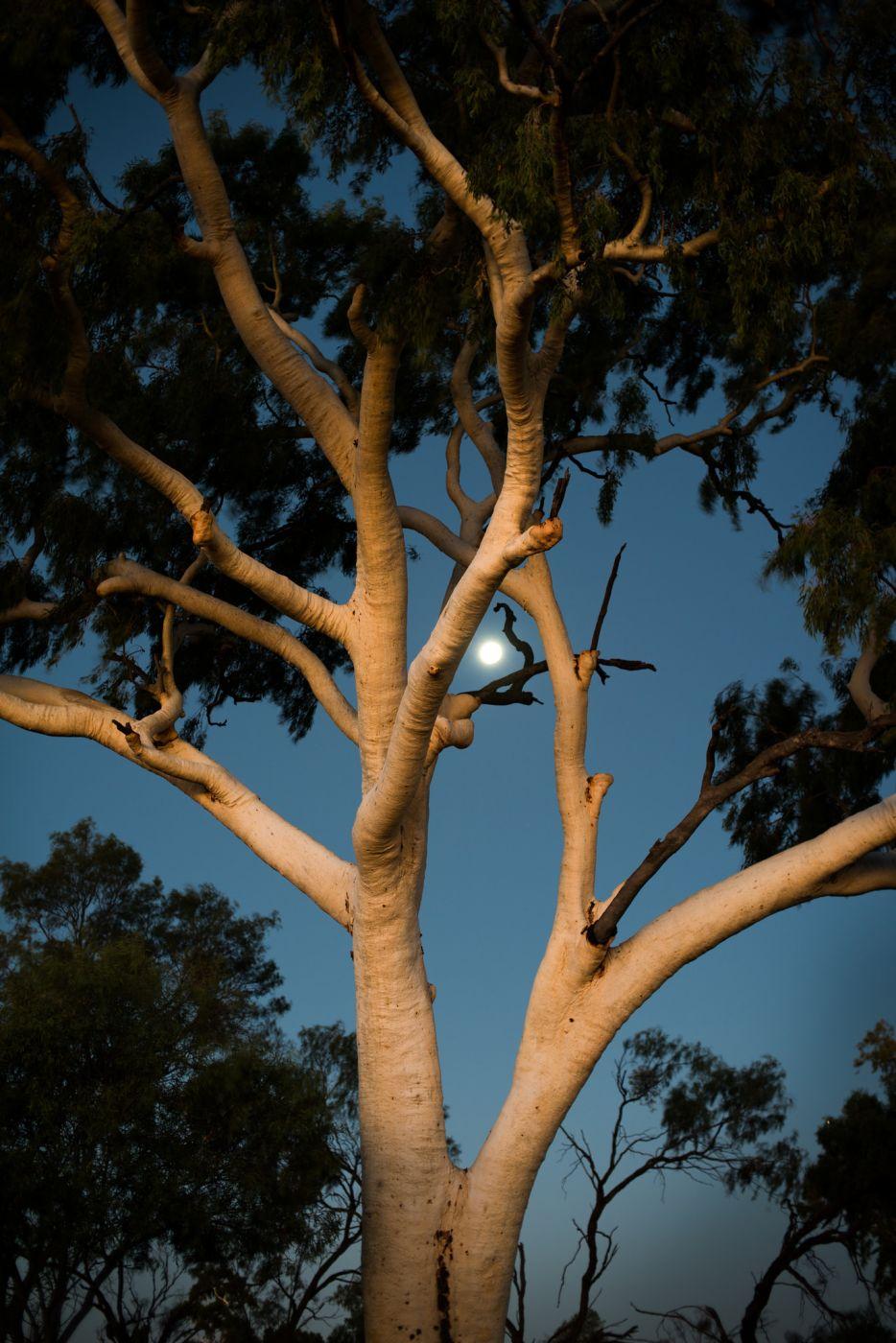 Set sun reflects off clouds to illuminate tree, Australia
