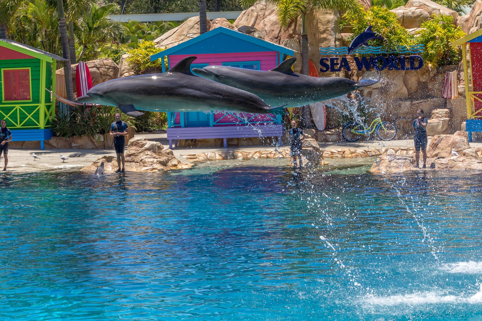 Affinity Dolphin Show - Sea World Gold Coast, Australia