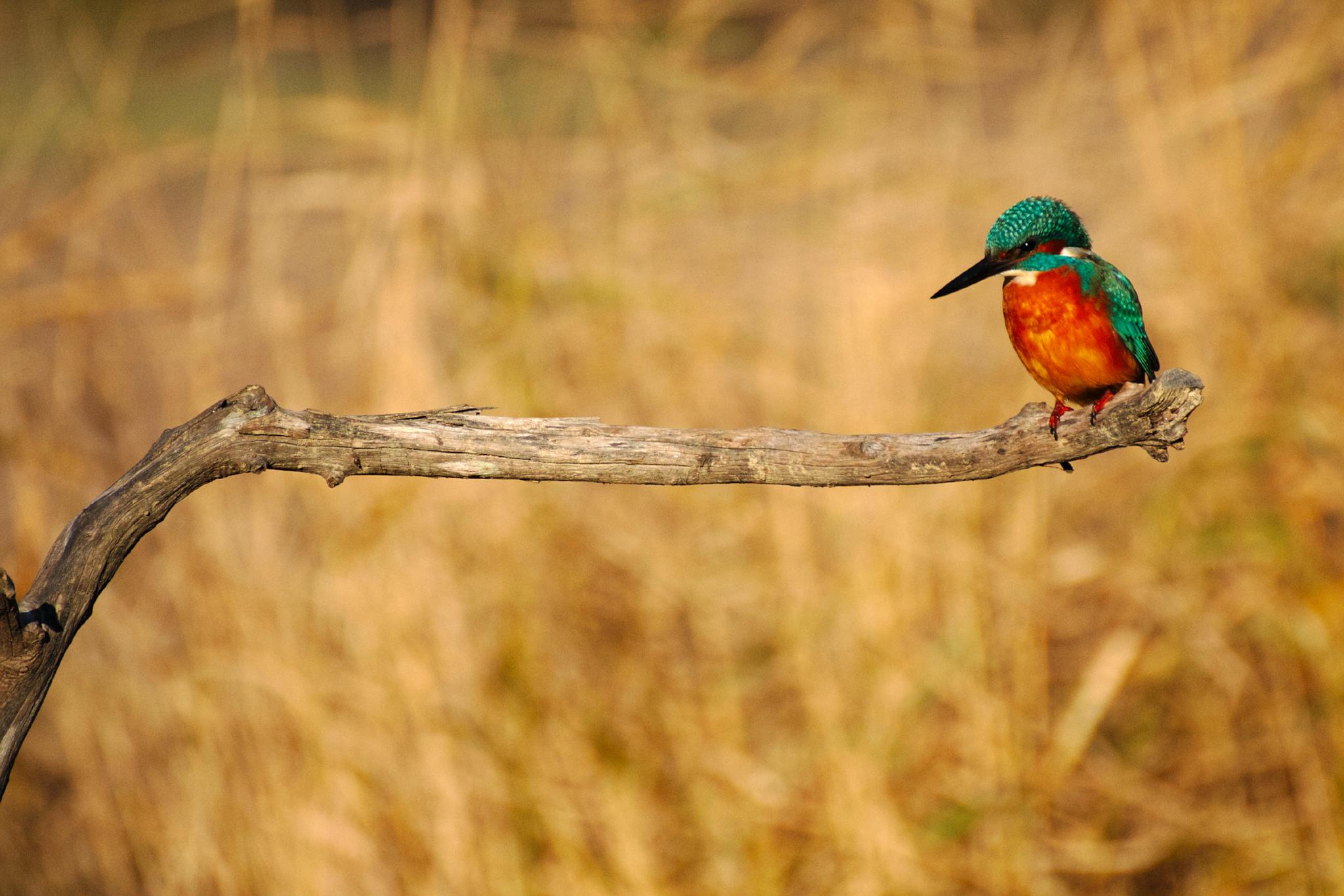 Birds domain, France, France