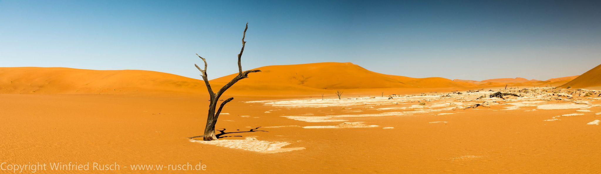 einsamer Baum, Namibia