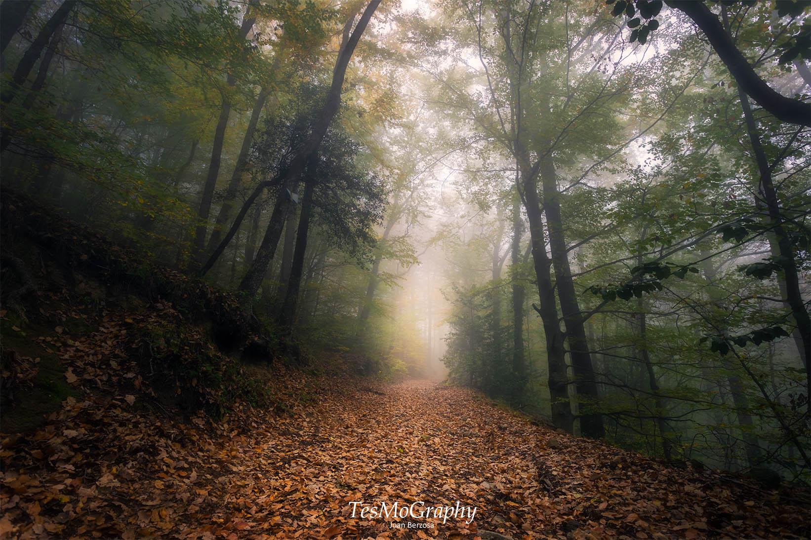 Foggy path, Spain