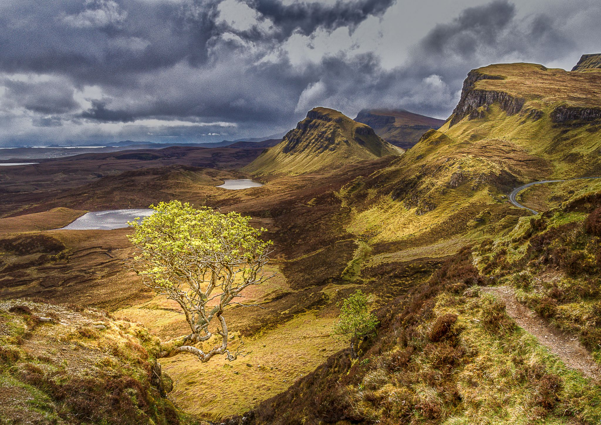 Lonely Tree at Quiraing, United Kingdom