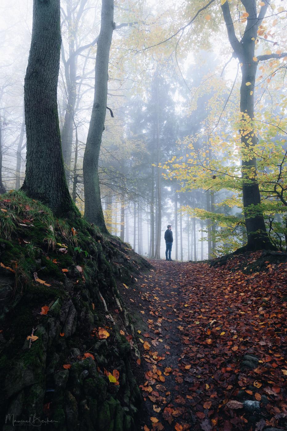 Path up to 3-Lake-View, Siebengebirge, Germany