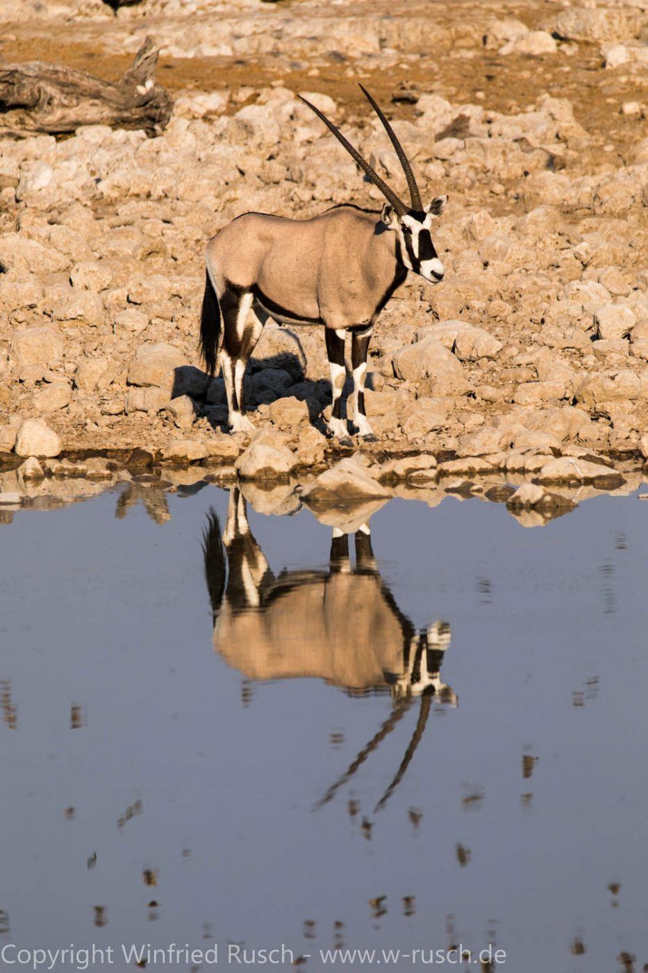 Wasserloch im Okaukuejo Camp, Namibia