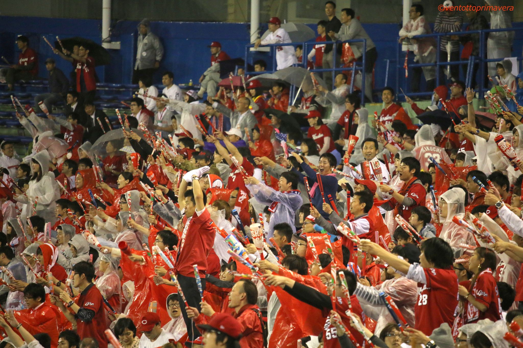 Carp fan in visiter seats of Jingu Stadium, Japan