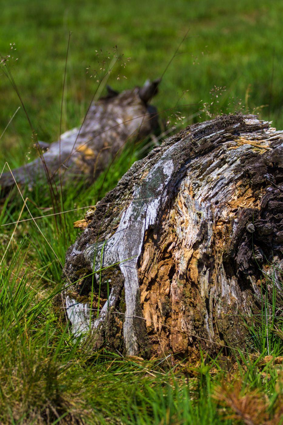 Deadwood at Wietingsmoor, Germany
