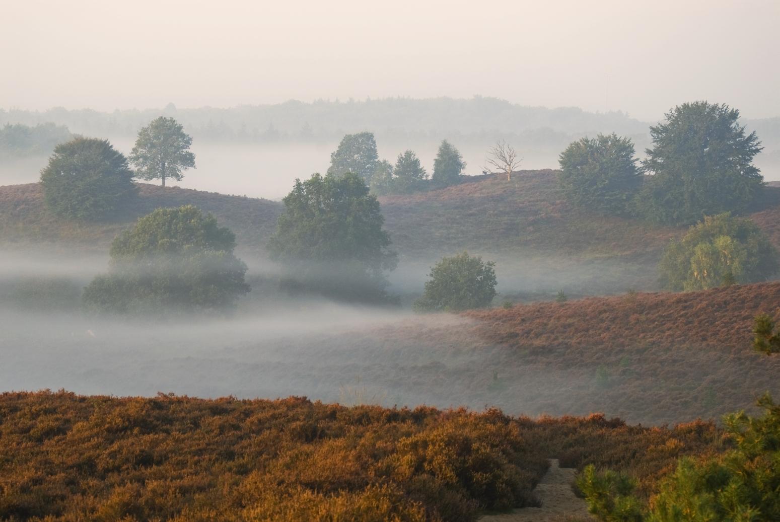 Early morning - fog location, Netherlands