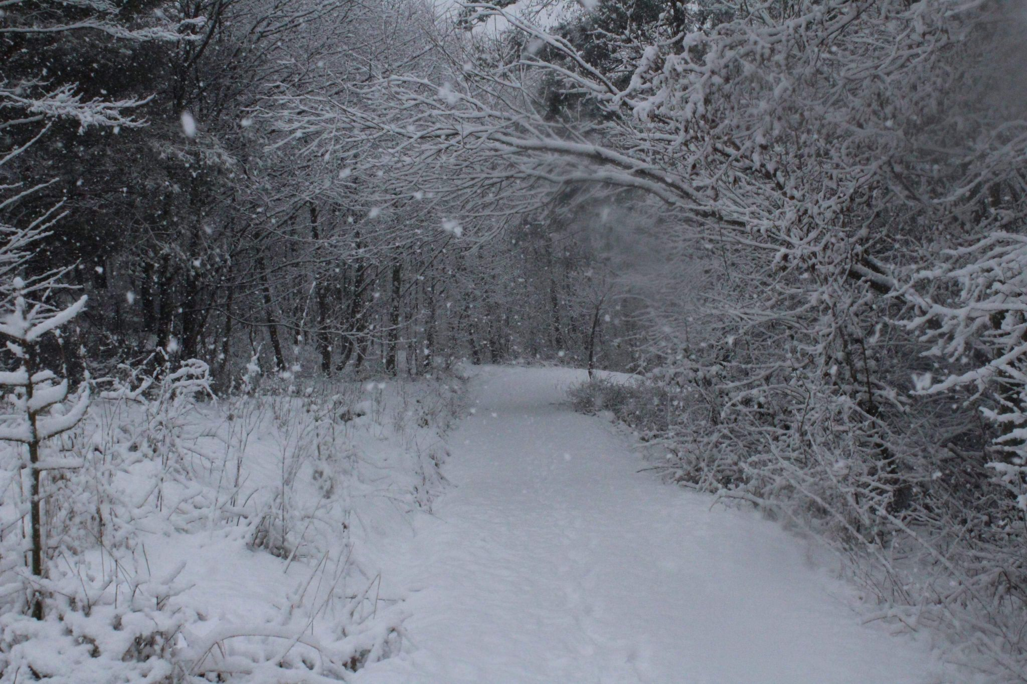 Woods, United Kingdom