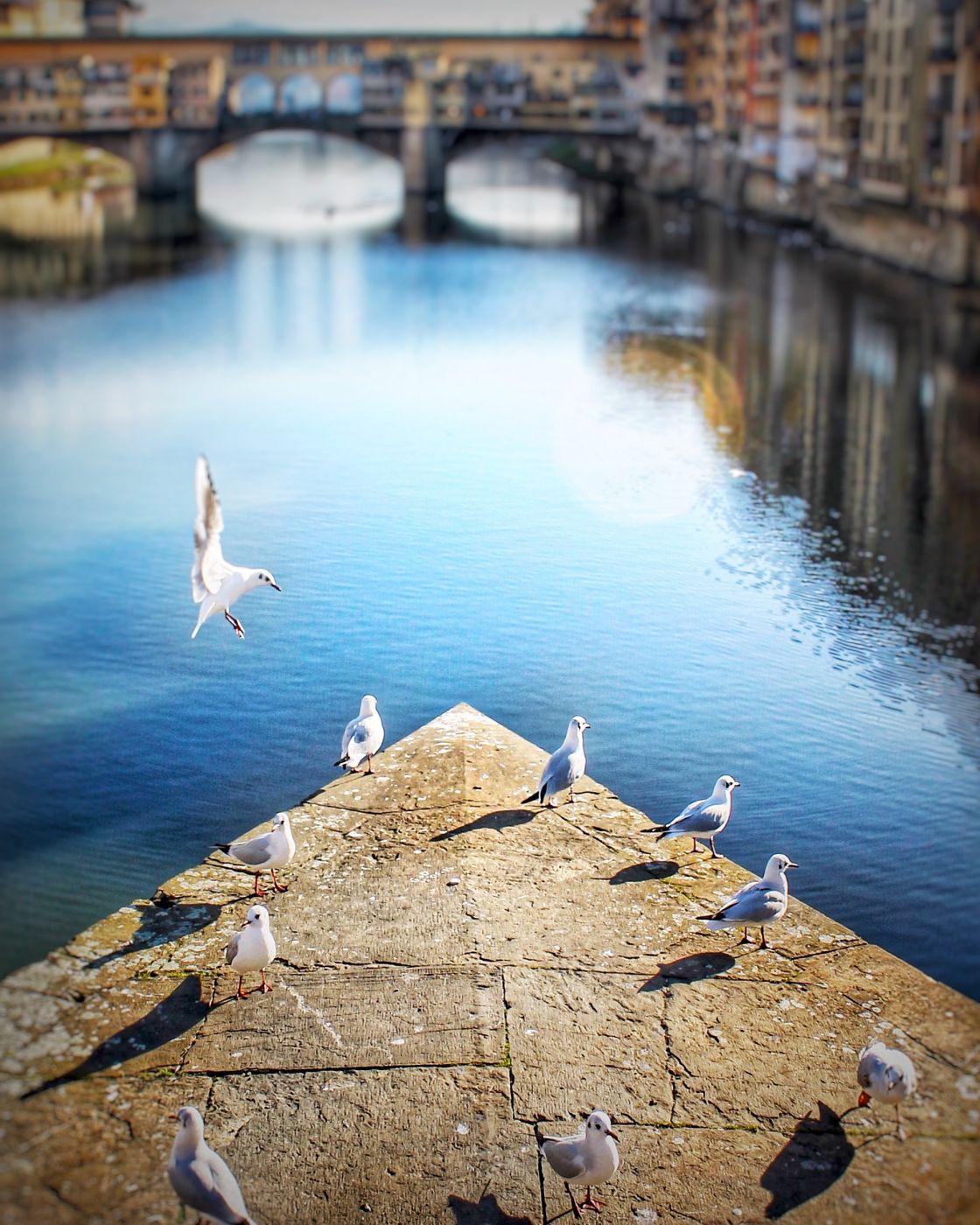 Bridge at Ponte Santa Trinita, Florence, Tuscany, Italy, Italy