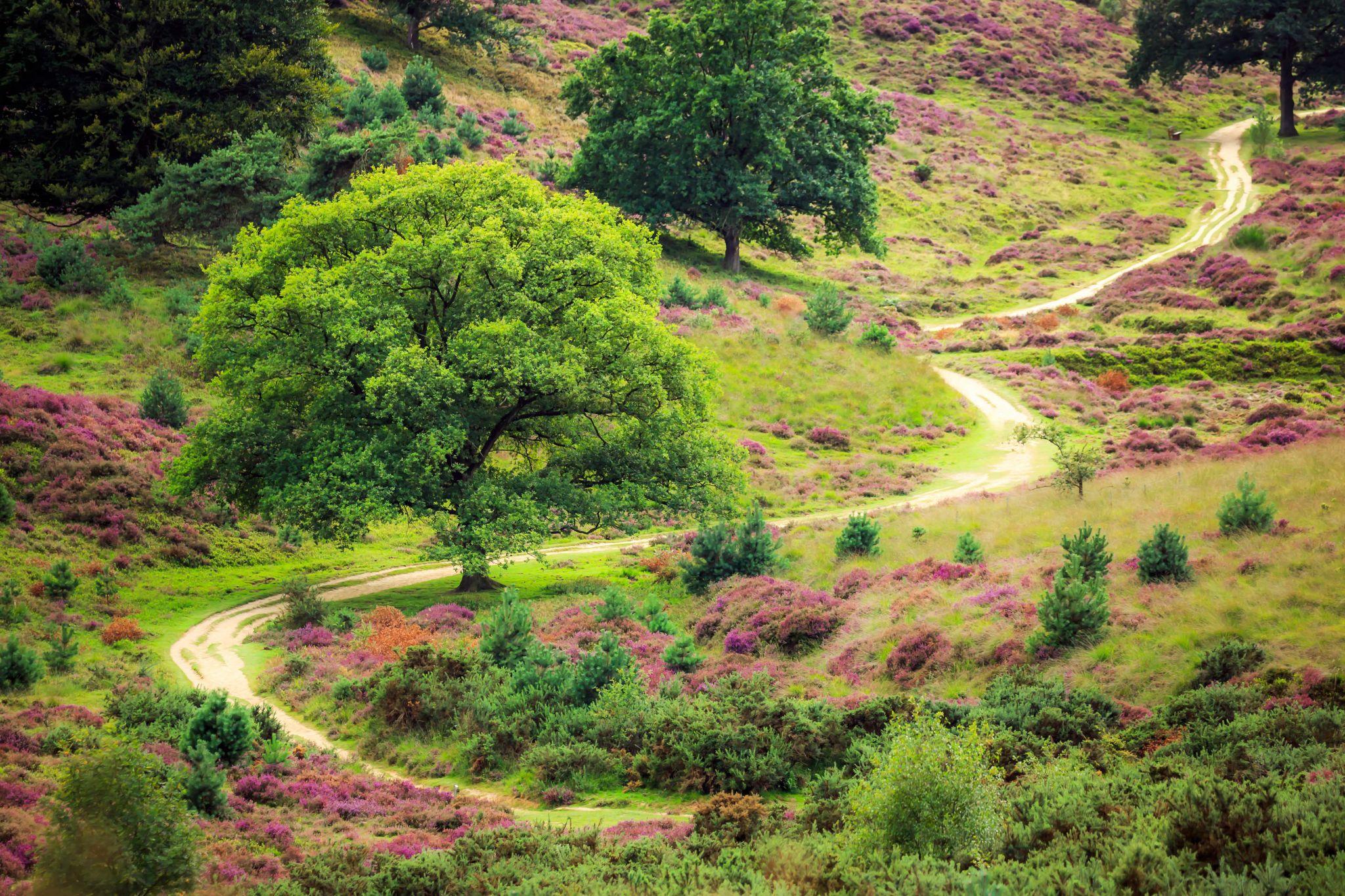 Purple Path, Netherlands