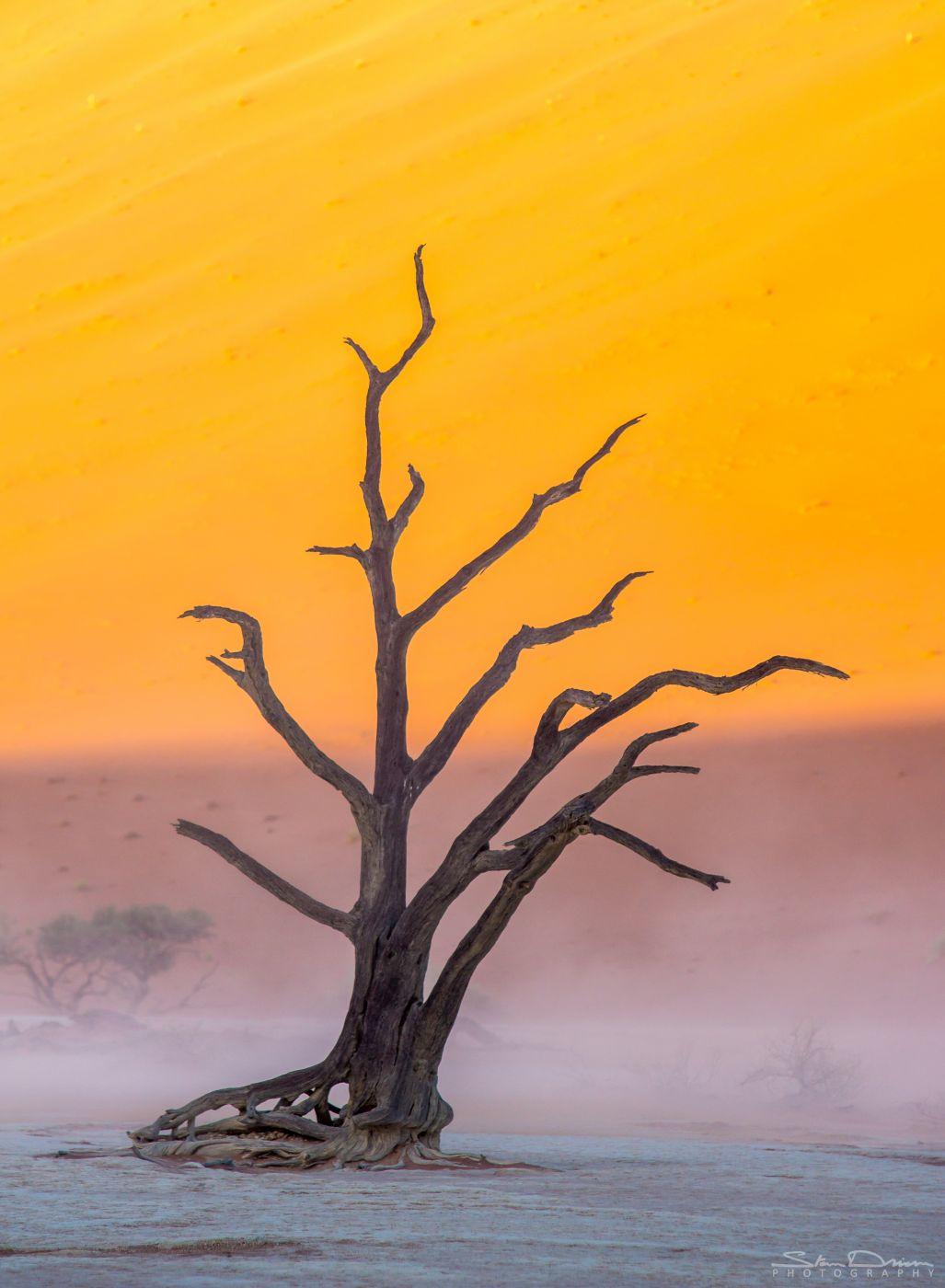 Deadvlei sandstorm, Namibia