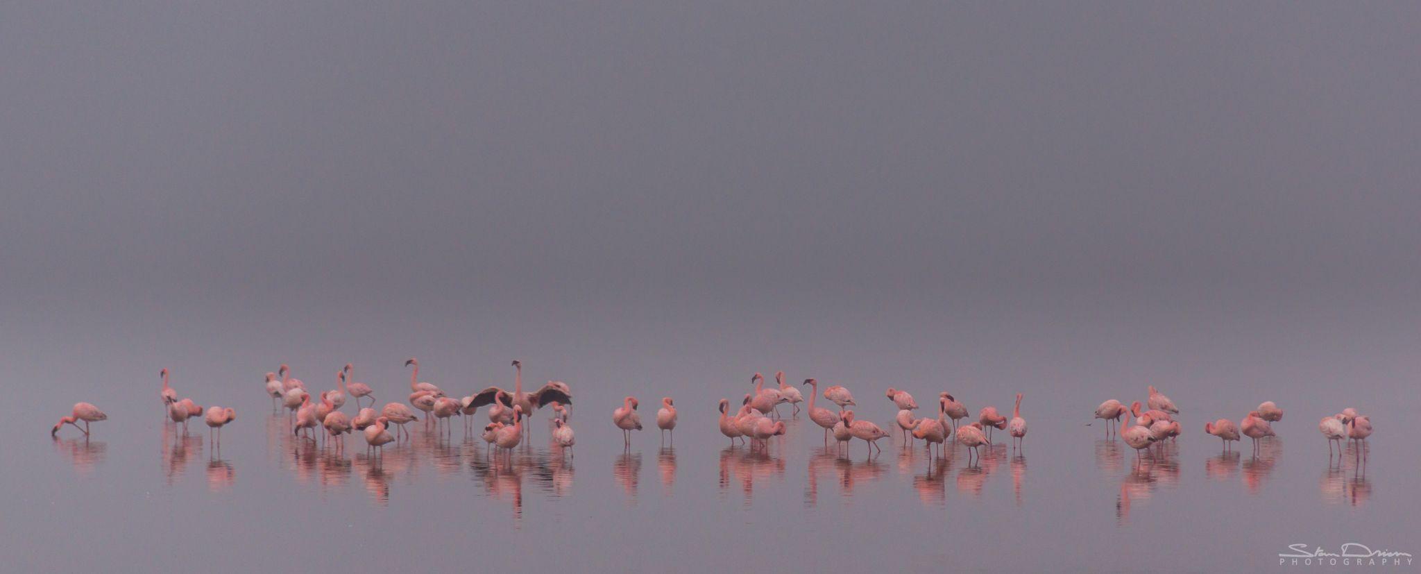 Flamingo gathering, Namibia