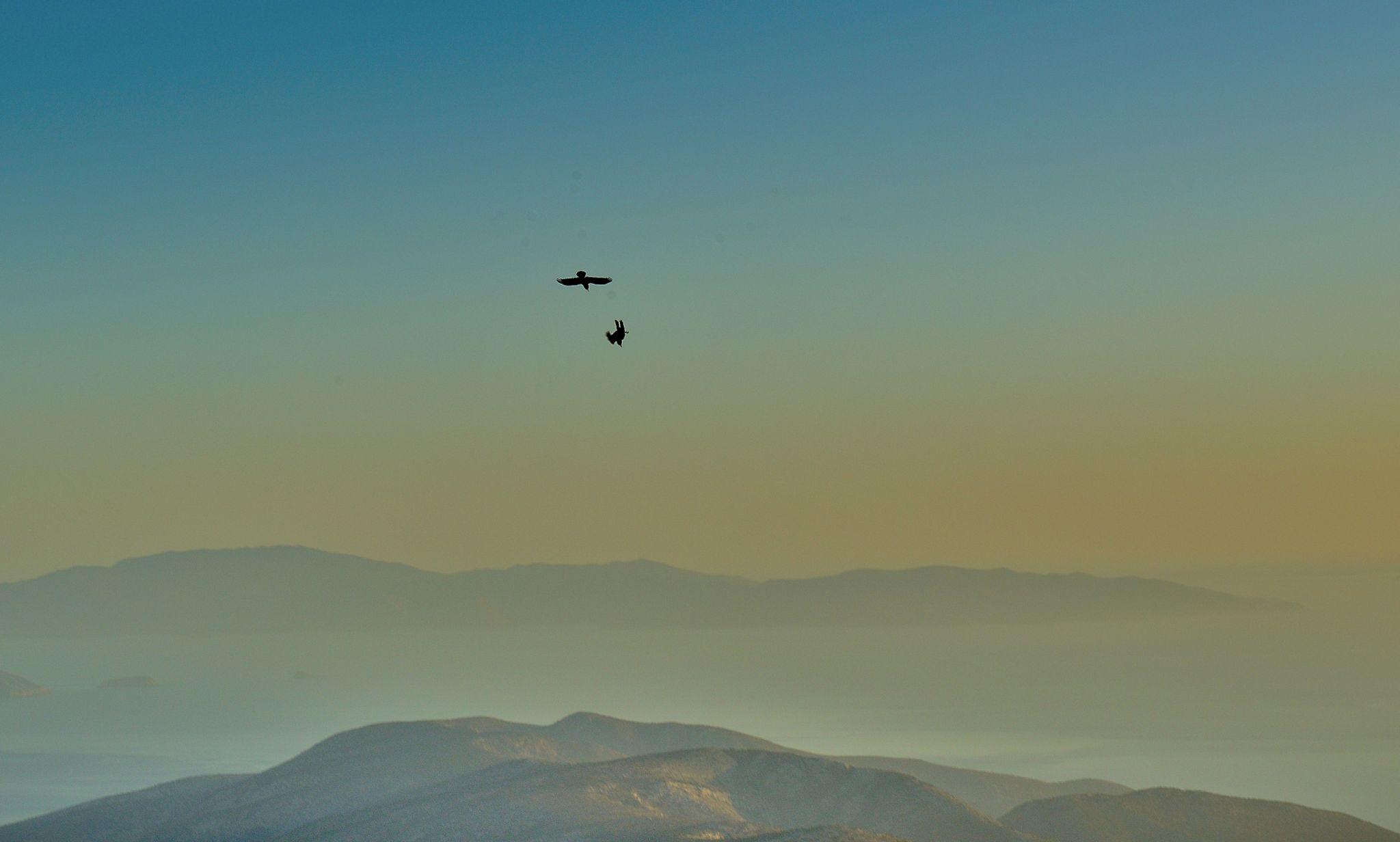 Mountain crows diving around Mount Zas, Naxos, Greece