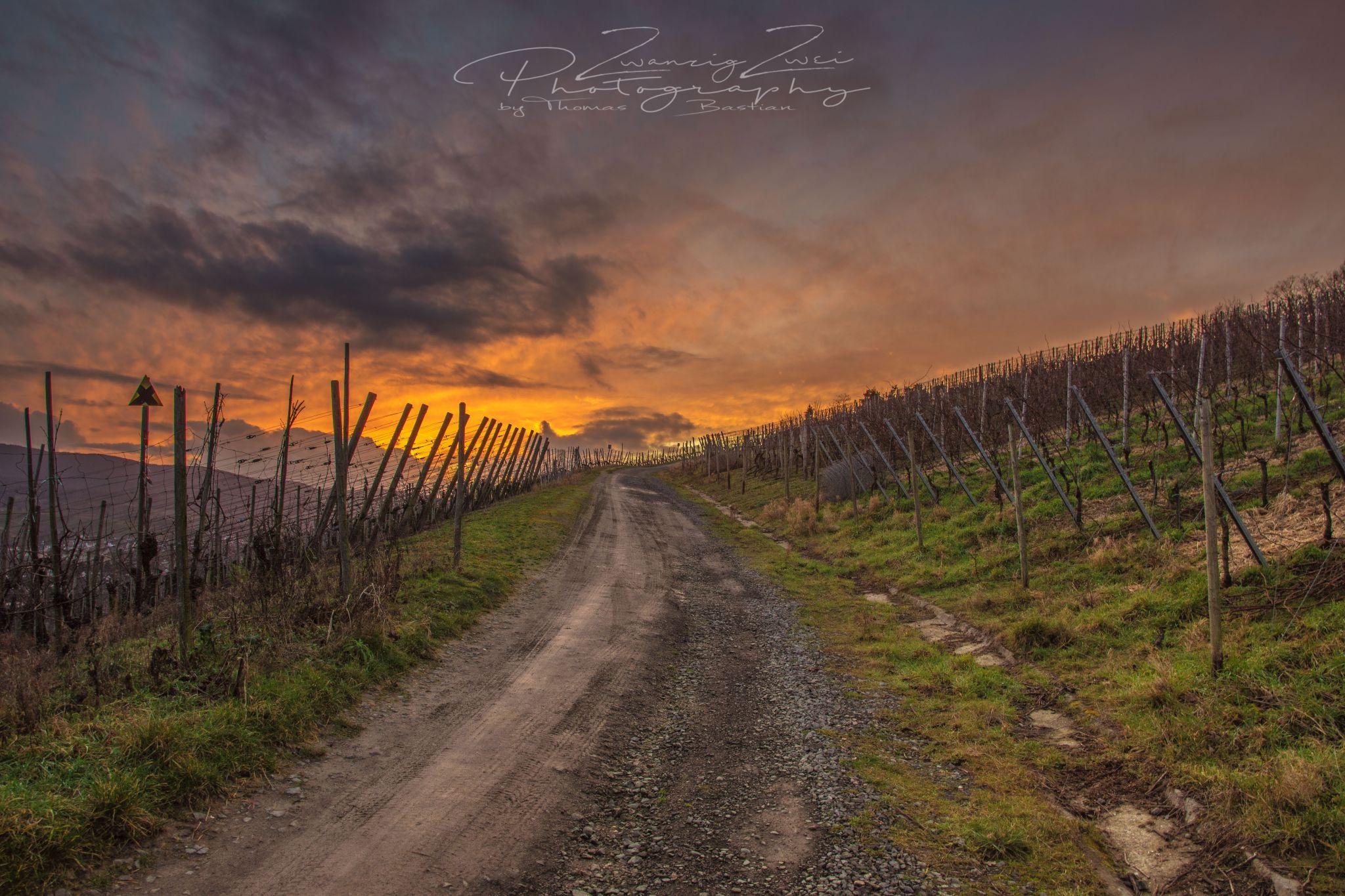 Sonnenuntergang auf dem Rotweinwanderweg, Germany