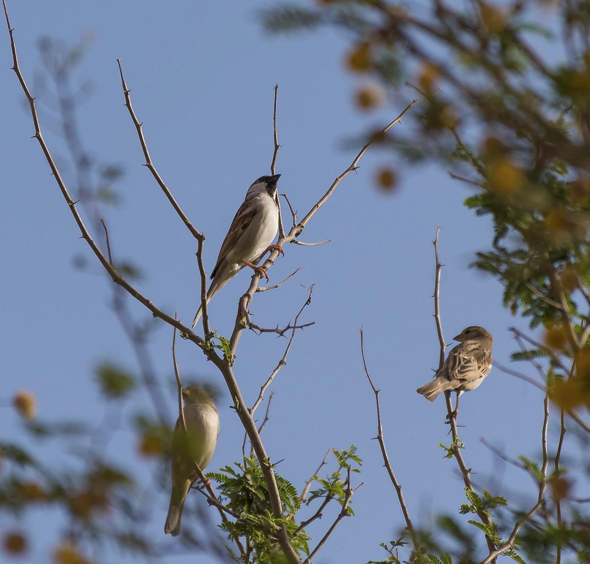 Wildlife & Nature, United Arab Emirates