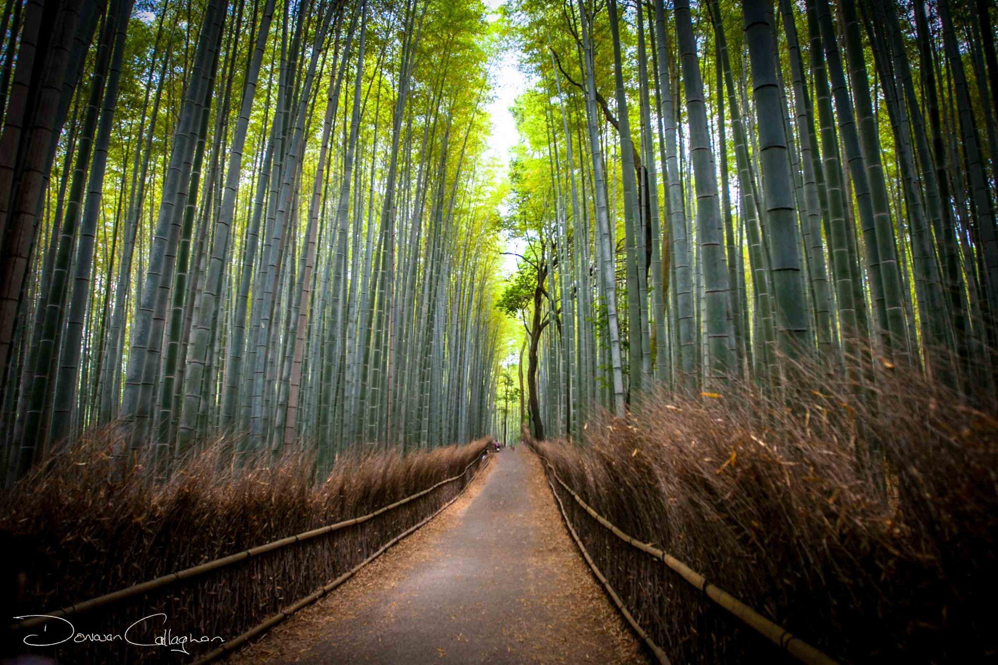 Arashiyama Bamboo Grove Kyoto, Japan