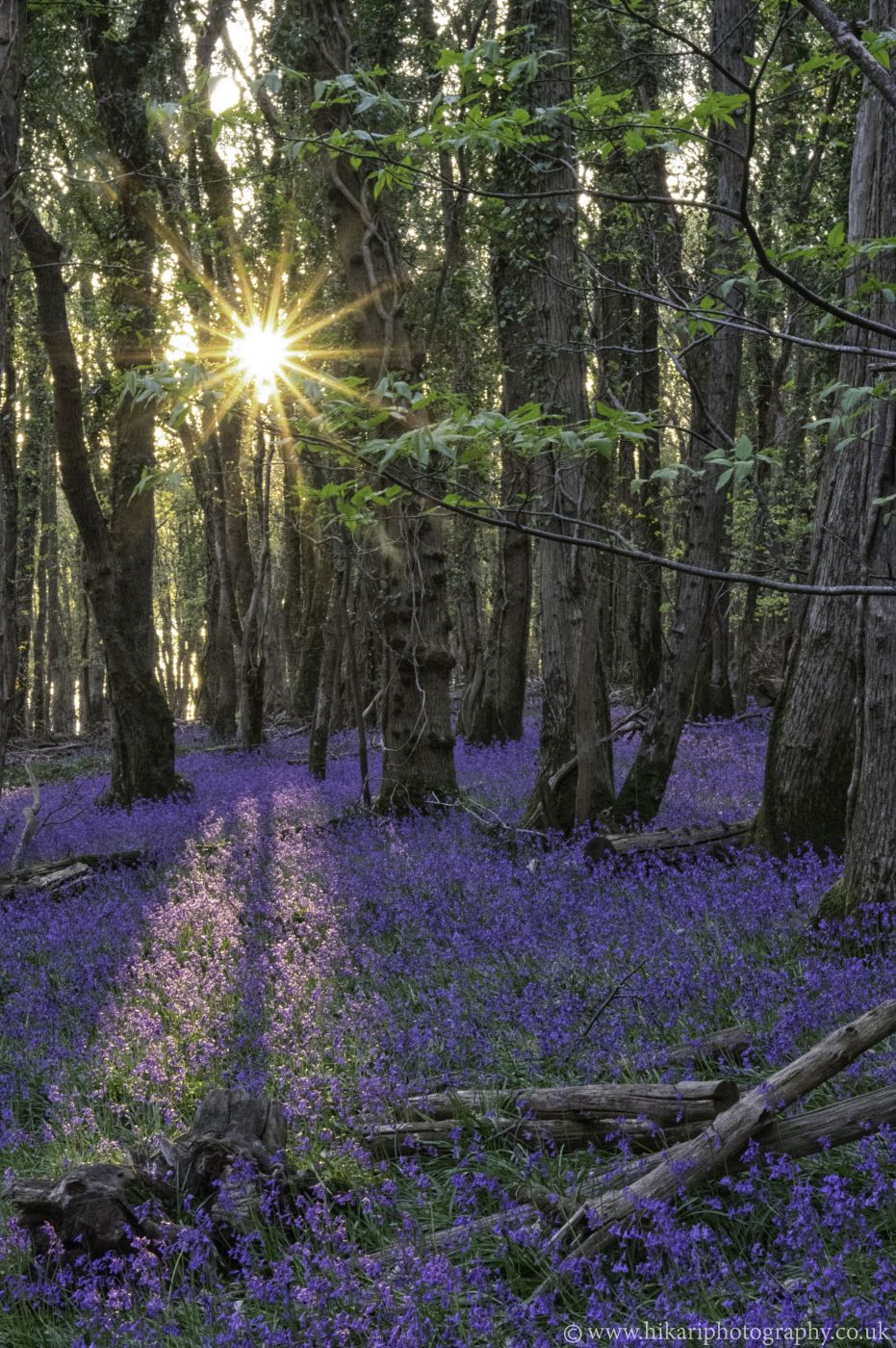 Blaxton Woods, United Kingdom