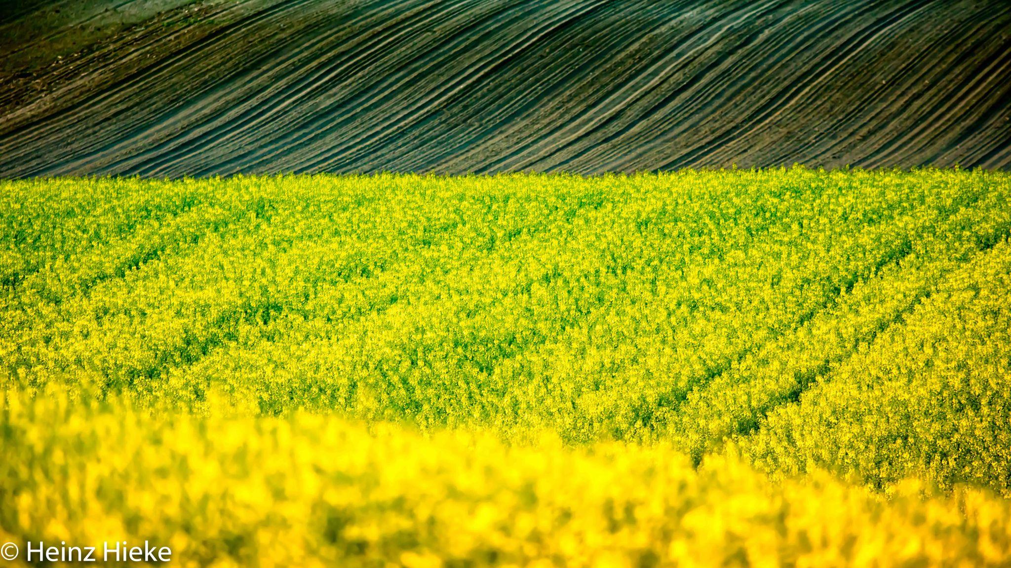 Fields, Switzerland