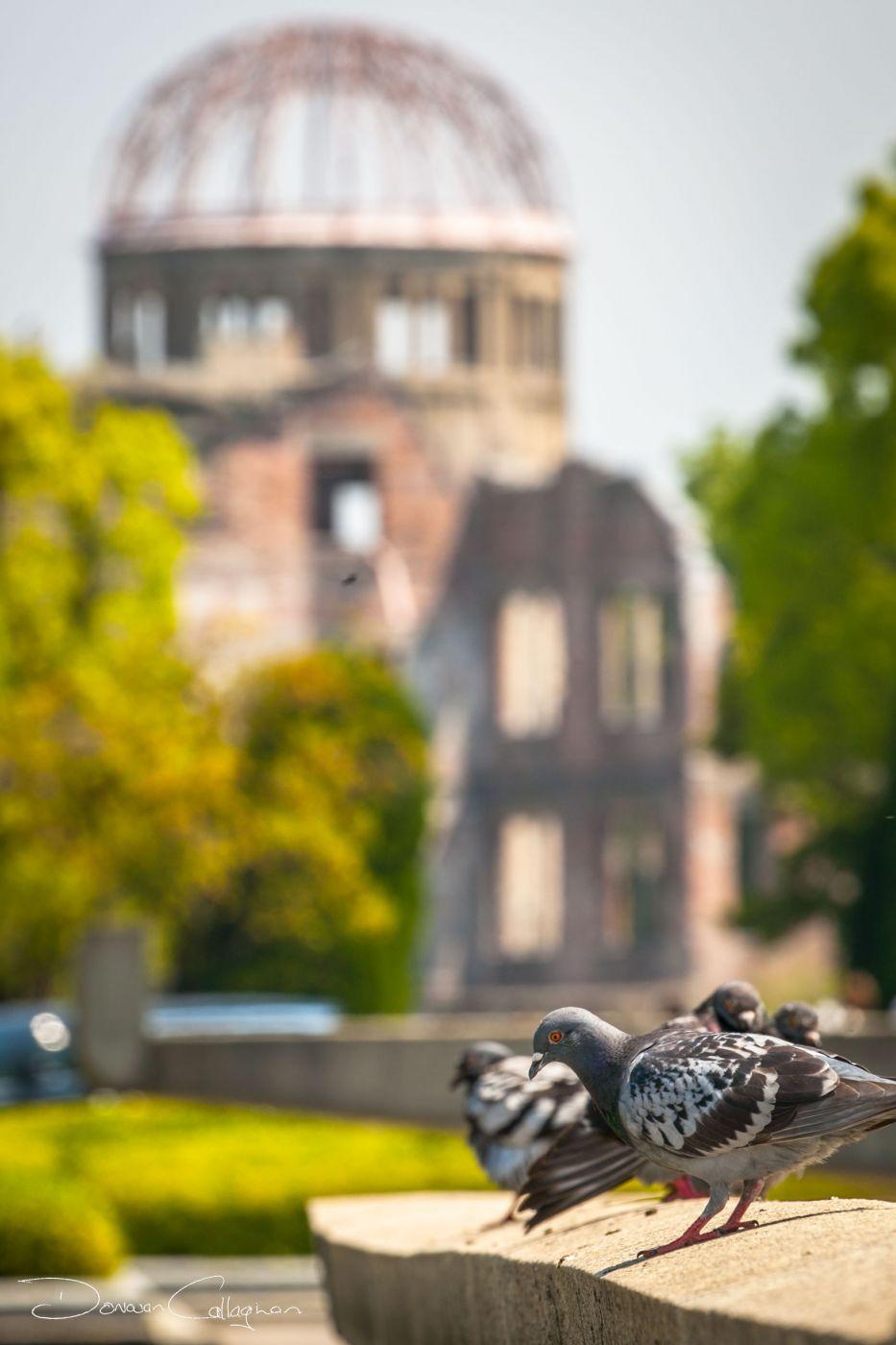 Hiroshima Pigeons, Japan