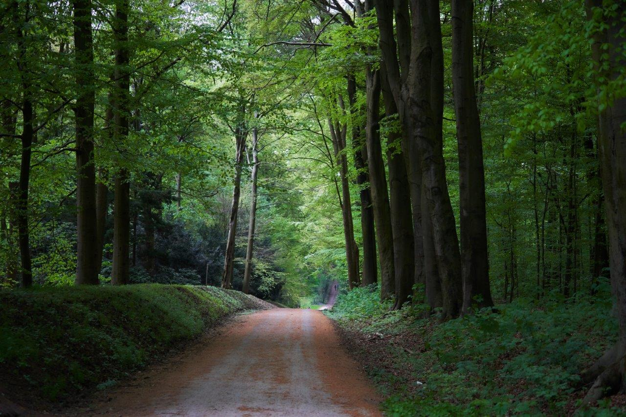 Winding road between trees (without car traffic), Germany