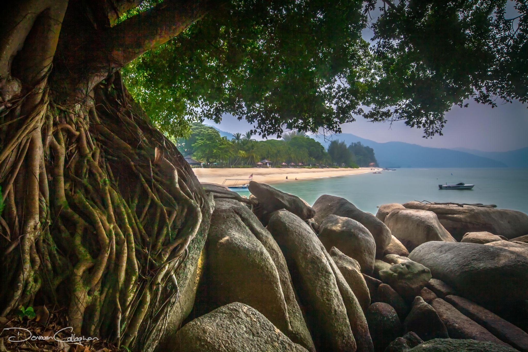Beach through the trees, Malaysia