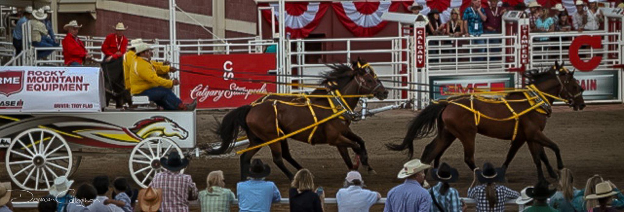 Calgary Stampede Chuck wagon racing, Canada