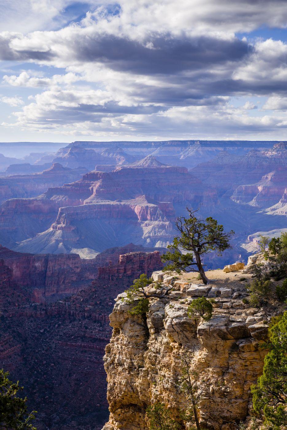 Grand Canyon Tree View, USA