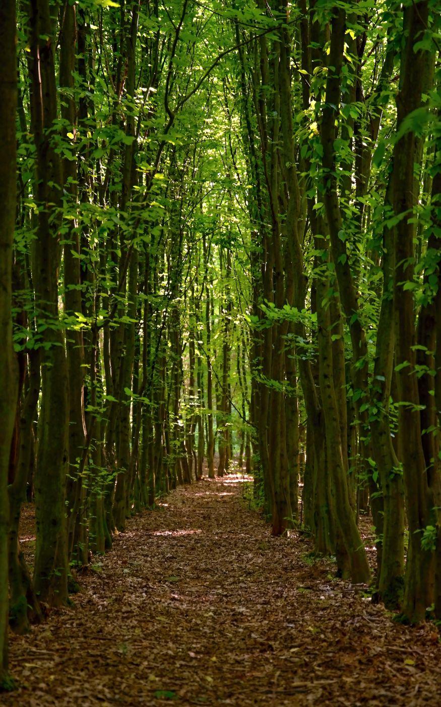 Lined forest, Czech Republic