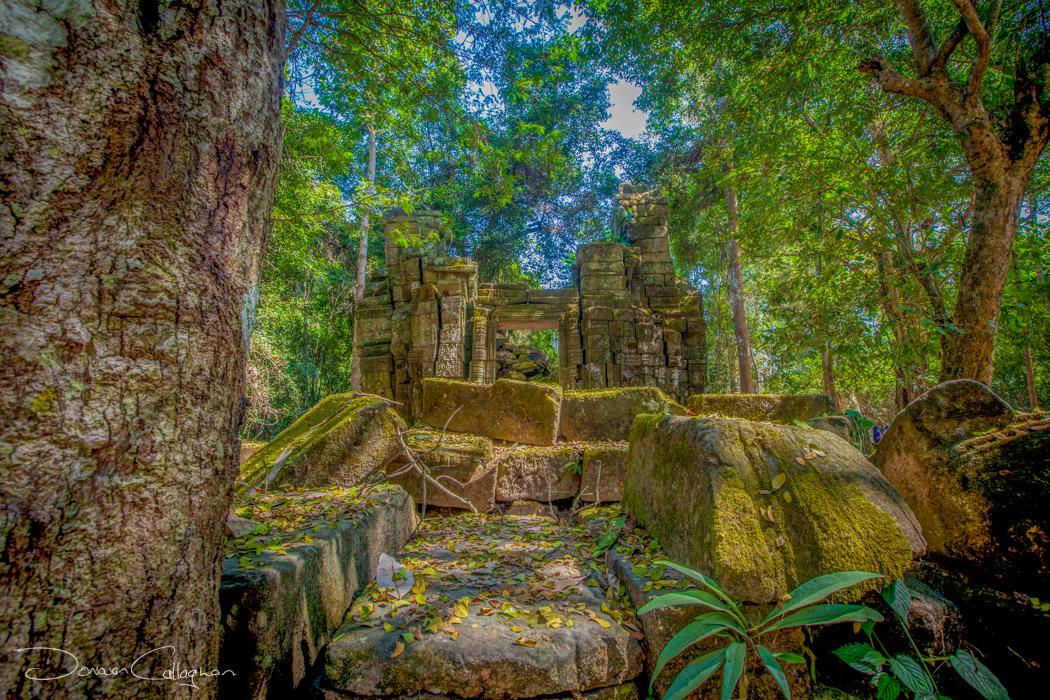 Ta Prohm bush setting Temple, Cambodia