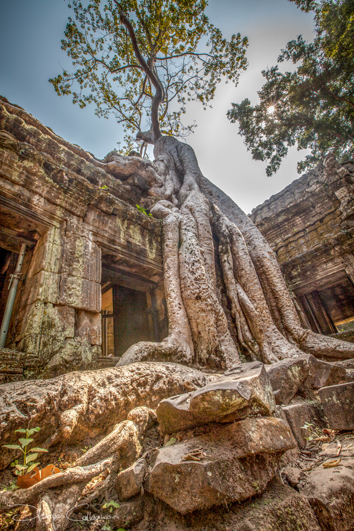 Ta Prohm tree root Temple, Cambodia
