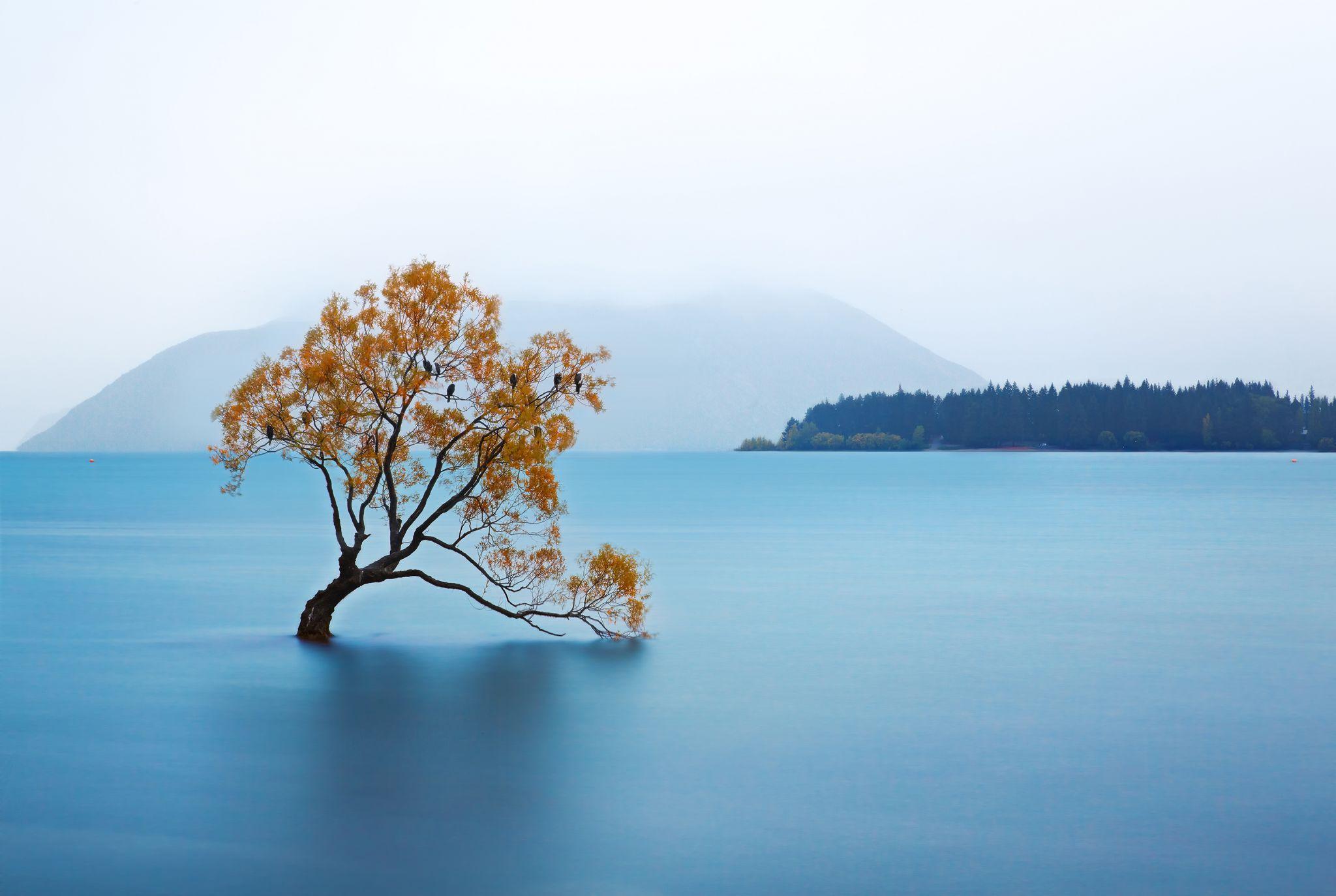 That Wanaka Tree, New Zealand