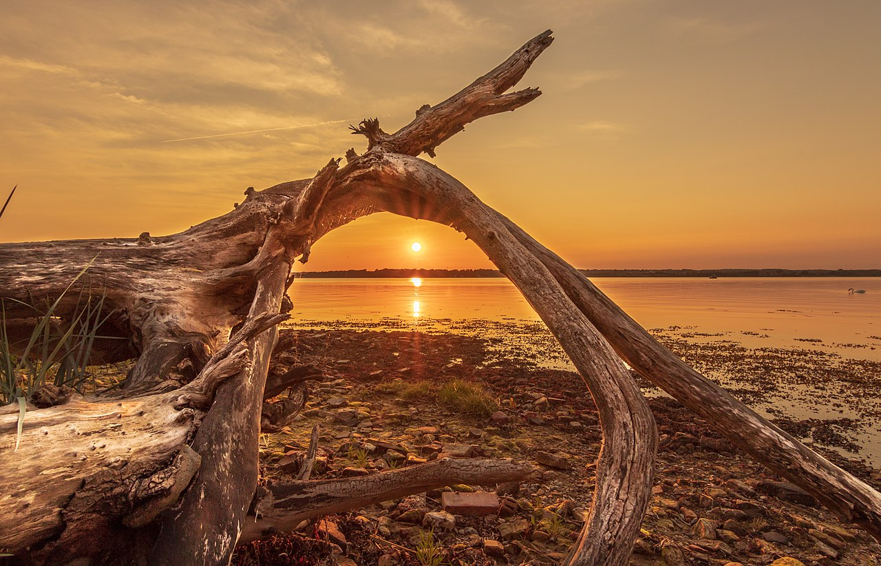 Driftwood in Holnis, Germany