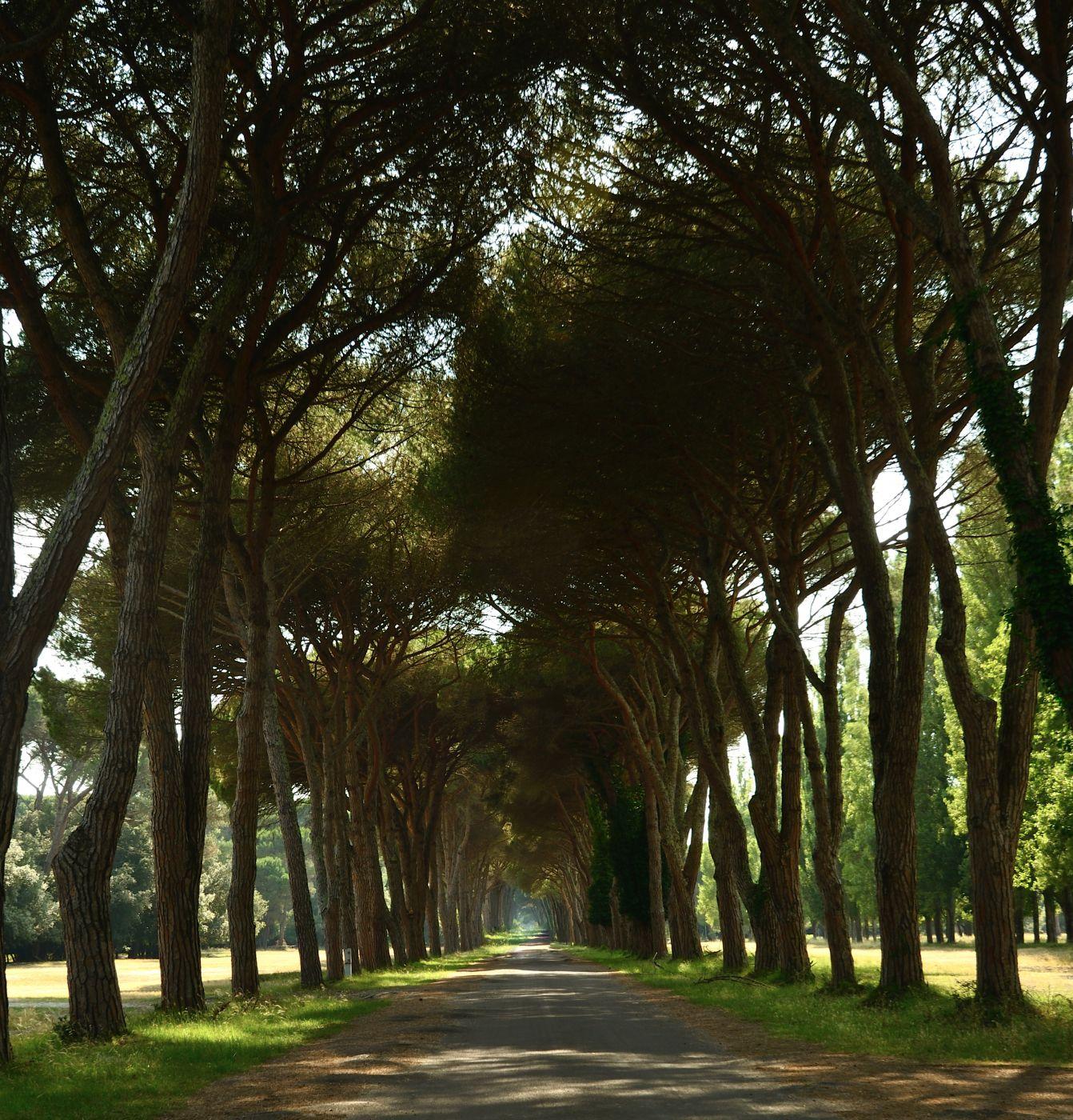 Park Parco naturale Migliarino San Rossore Massaciuccoli, Italy