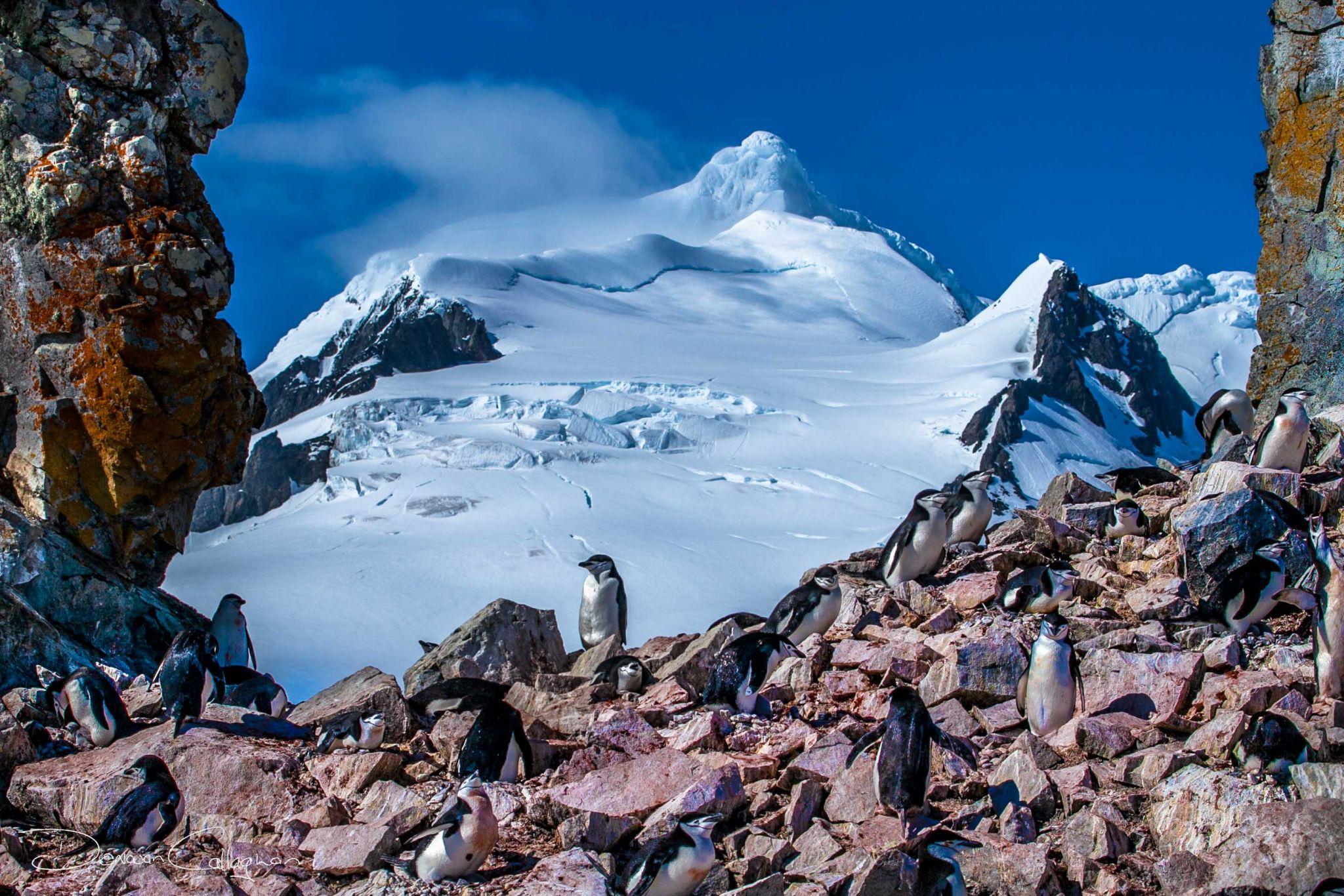 Penguins Nesting in front of Mountain Antarctica, Antarctica
