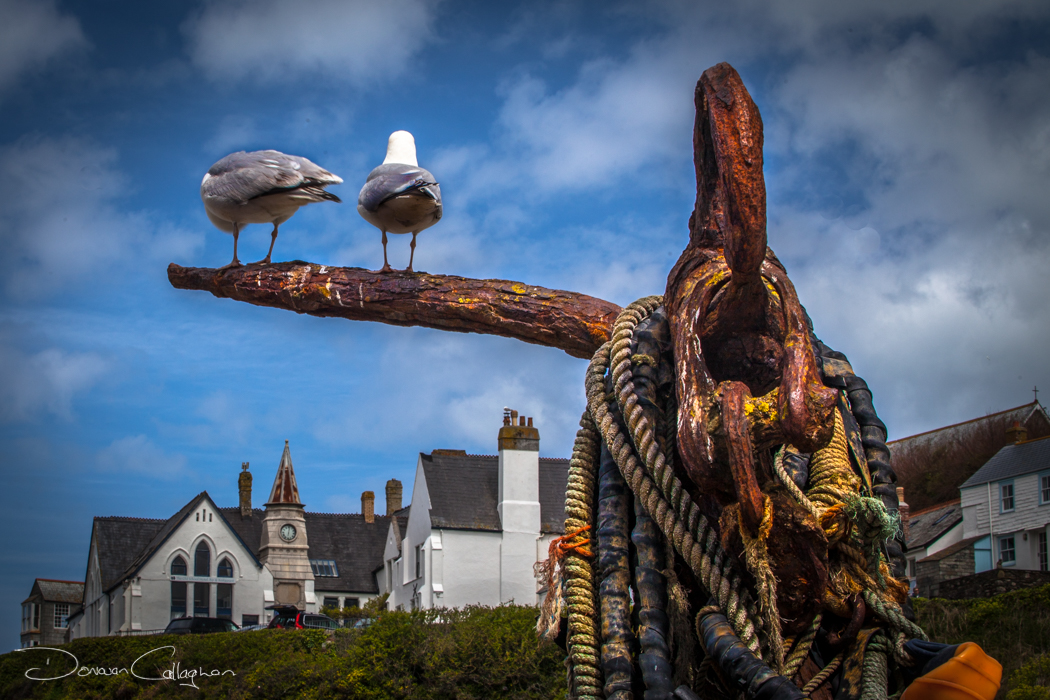 Seagulls looking at the School building Port Isaac, United Kingdom