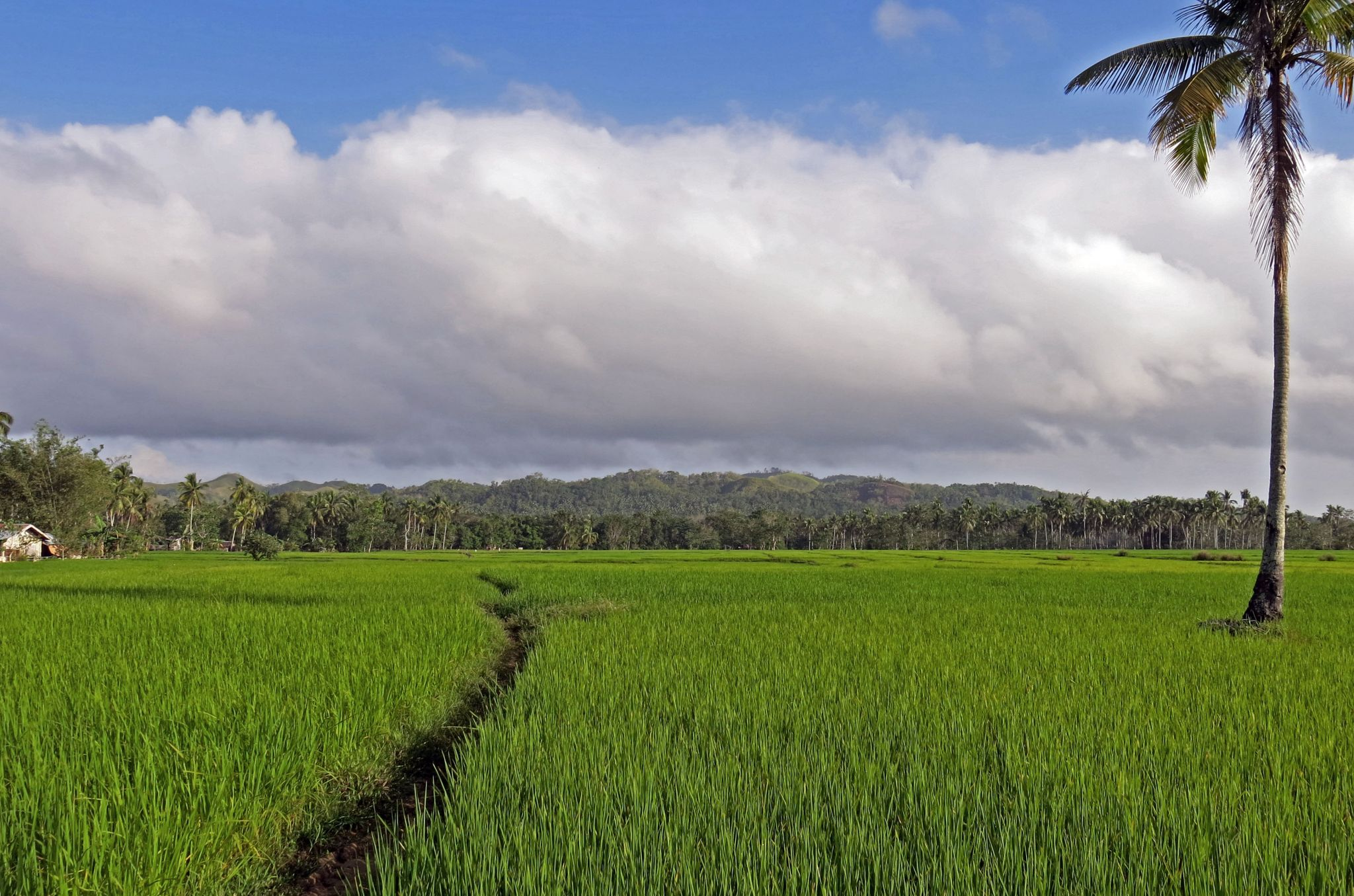 Tabonuk near Dagohoy, Philippines