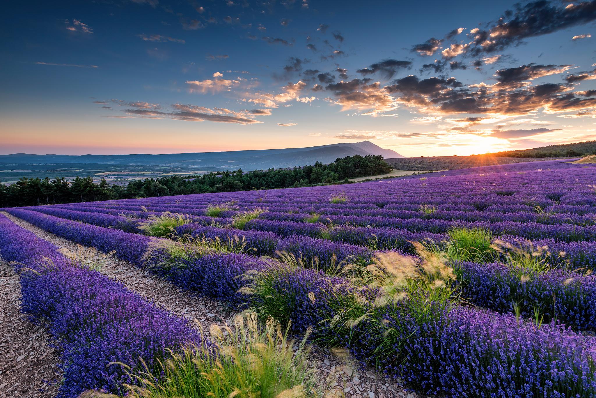 Lavender and Mont Ventoux, France