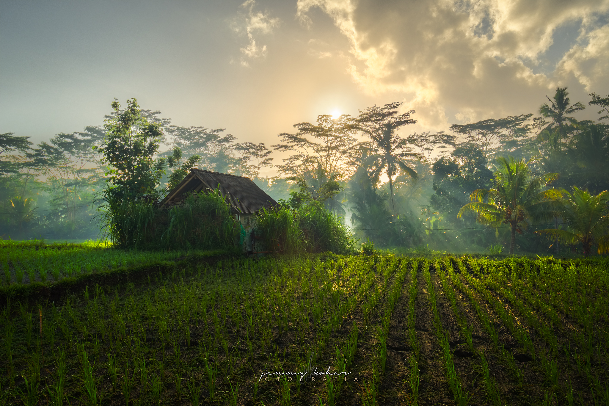 Morning Rays at Susut Rice Terrace, Bali, Indonesia