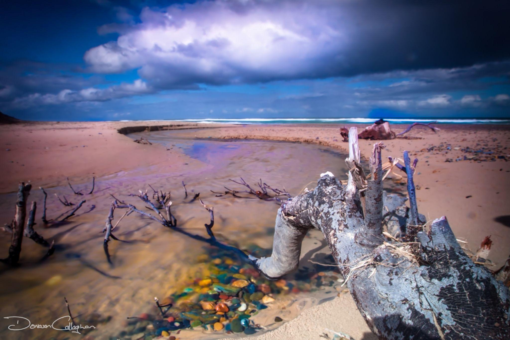 Old Bar Beach Log NSW North Coast, Australia