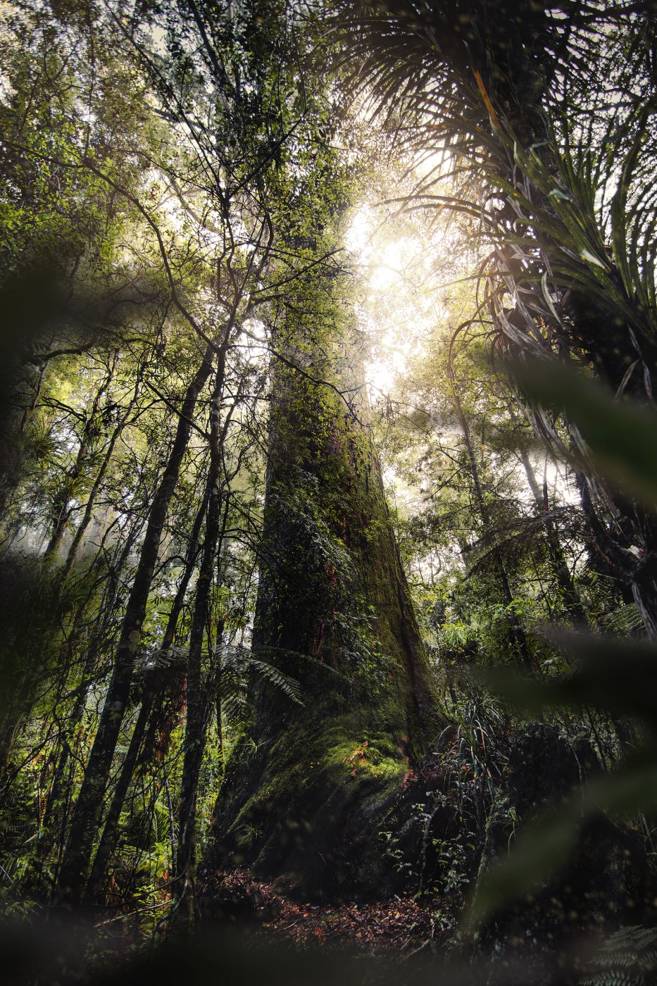 Puketi Forest, New Zealand