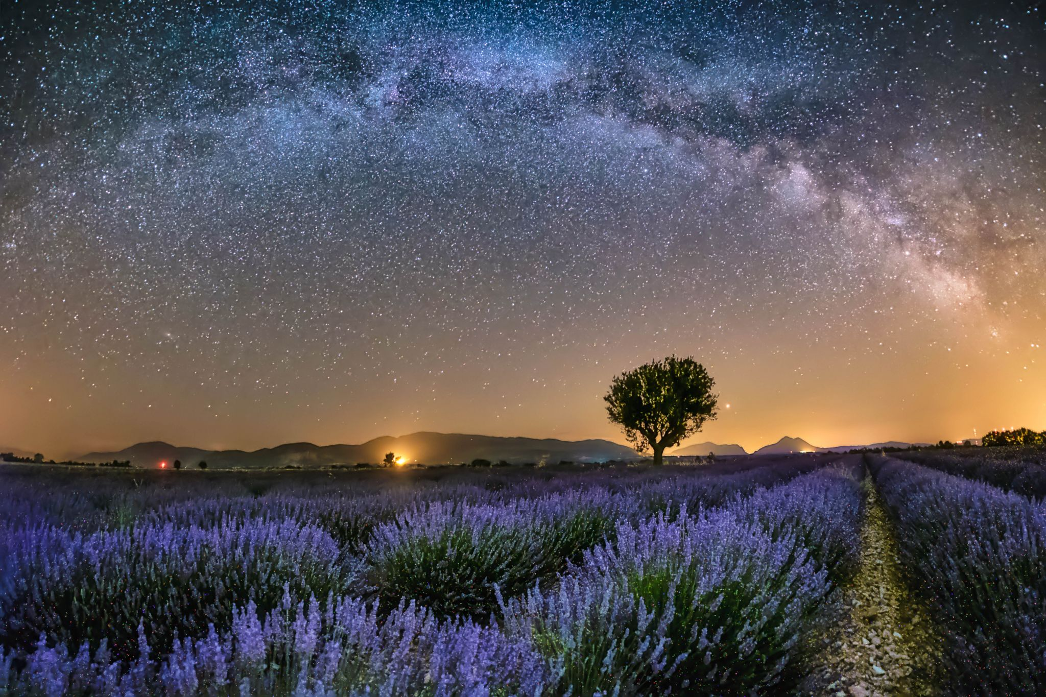 The tree at Valensole, France