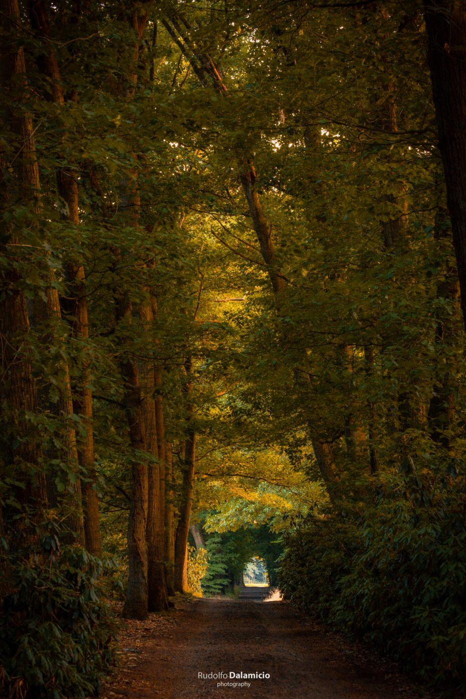 Tunnel Vision, Netherlands