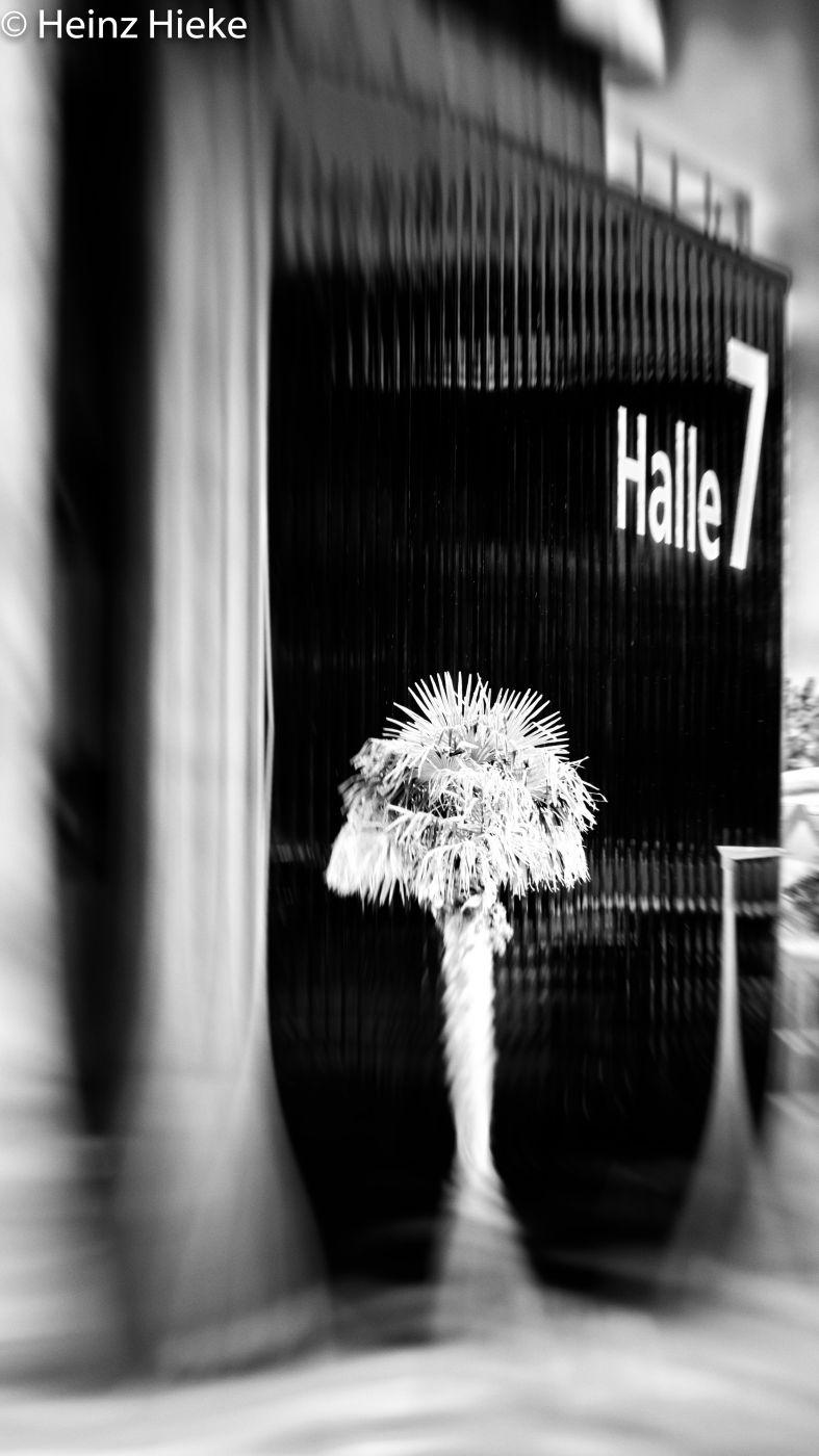 Halle 7, Switzerland