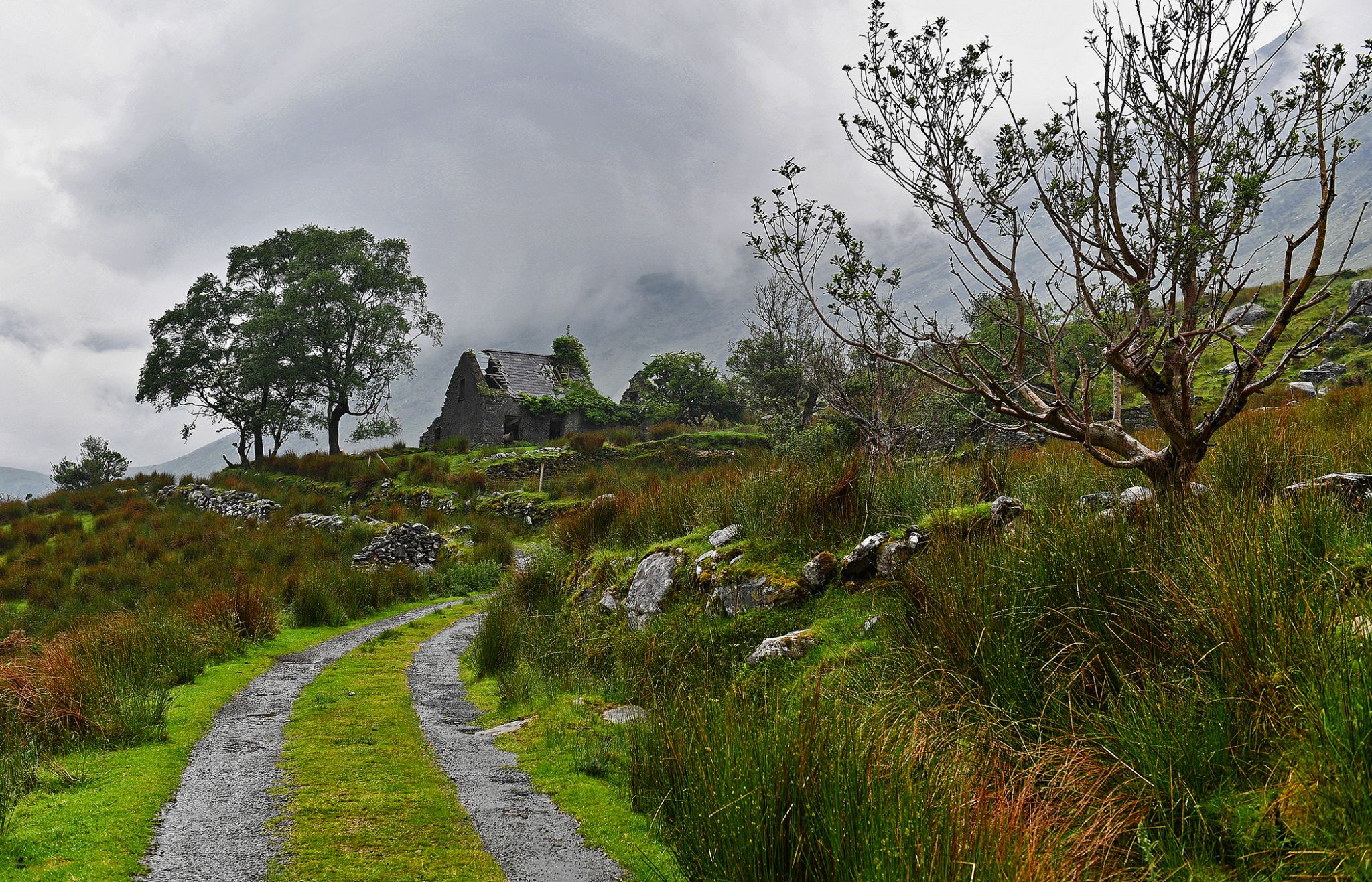 Molly's Cottage, Ireland