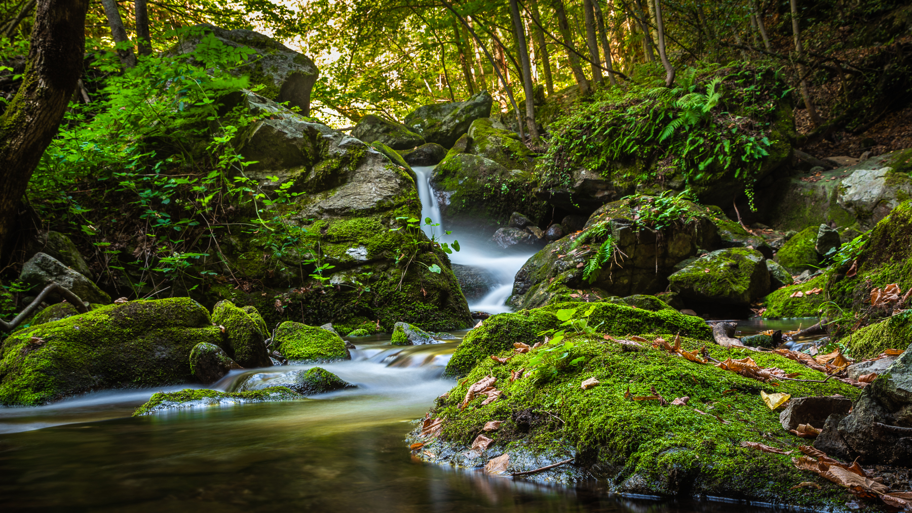 Pyrenees: Deep in the forest, France