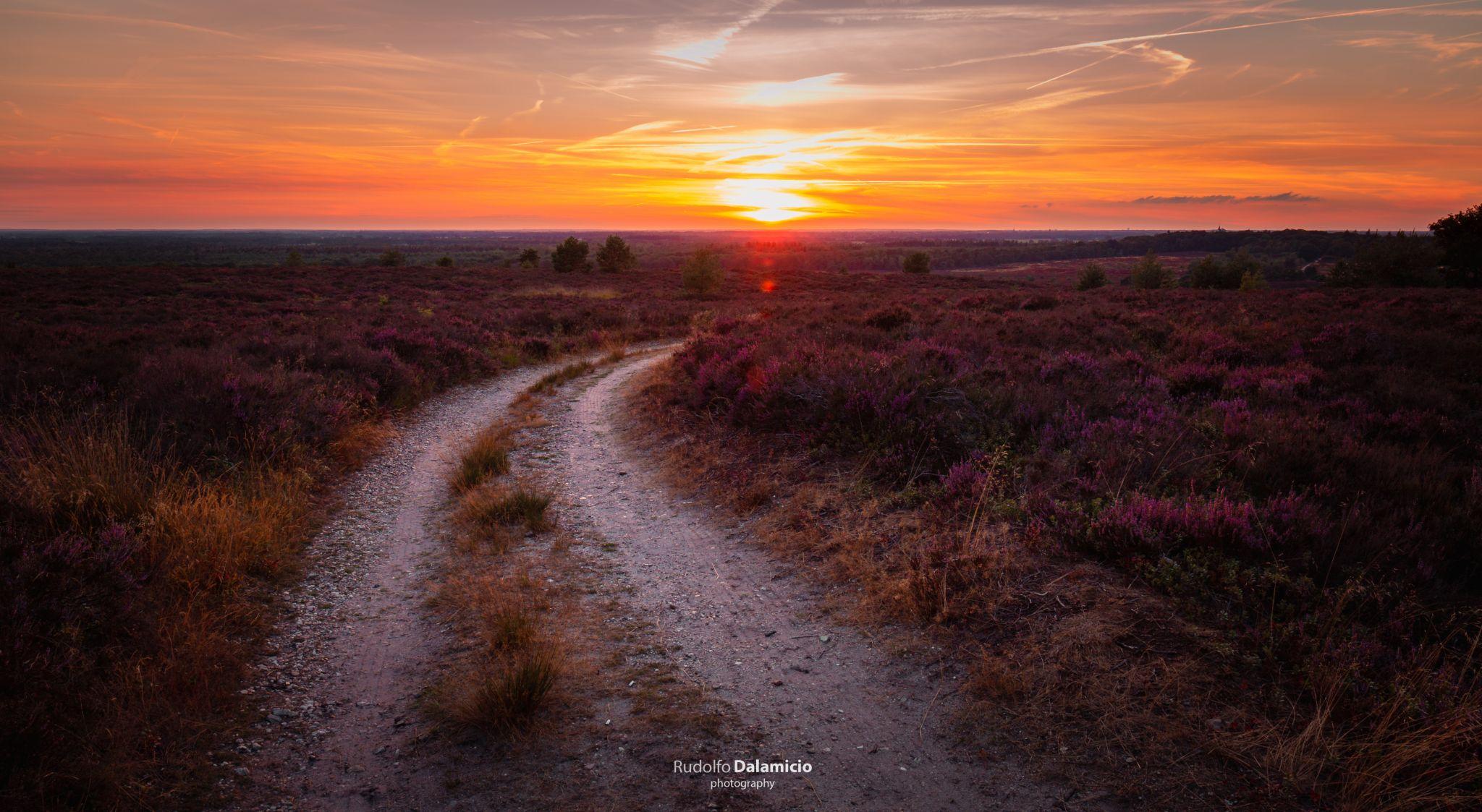 Turning Purple, Netherlands