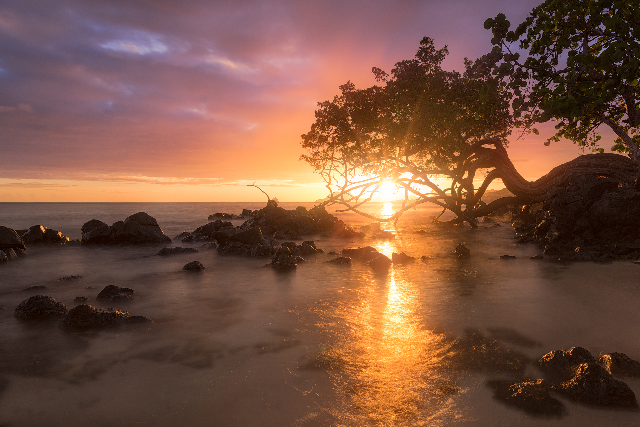 Anse Figuier, Martinique, Martinique