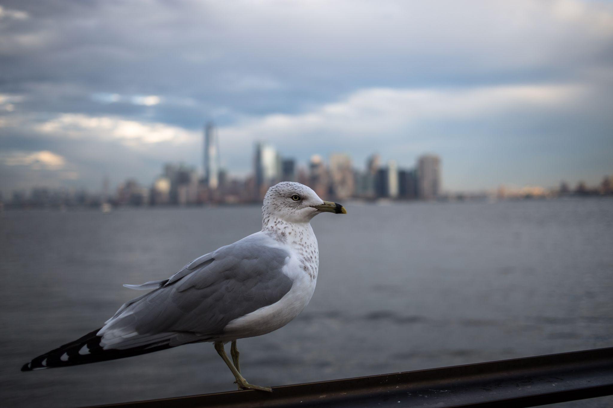 Lower Manhattan view from Liberty Island, USA