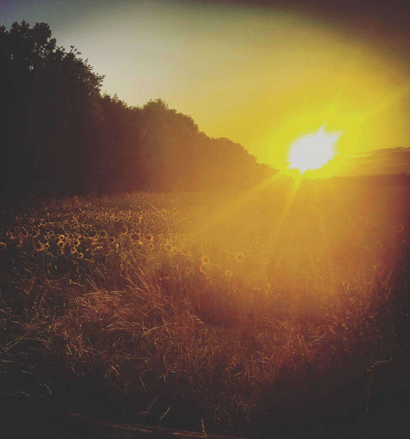 Sunshine, Germany